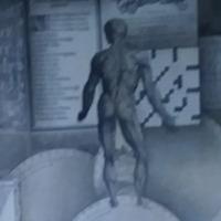 De Humani Corporis Fabrica Back Muscular Anatomy